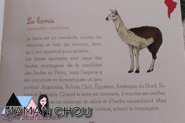 ma-pochette-montessori-les-animaux-des-continents-7