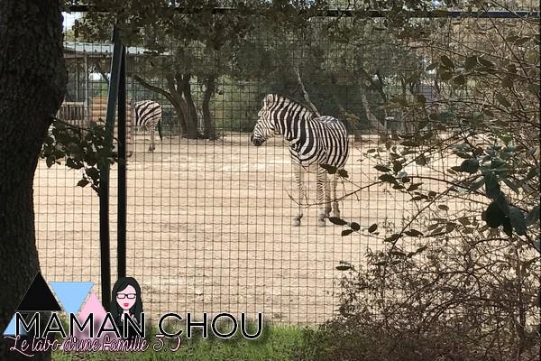 zoo-de-la-barben-16