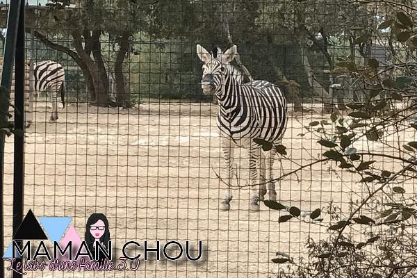 zoo-de-la-barben-17