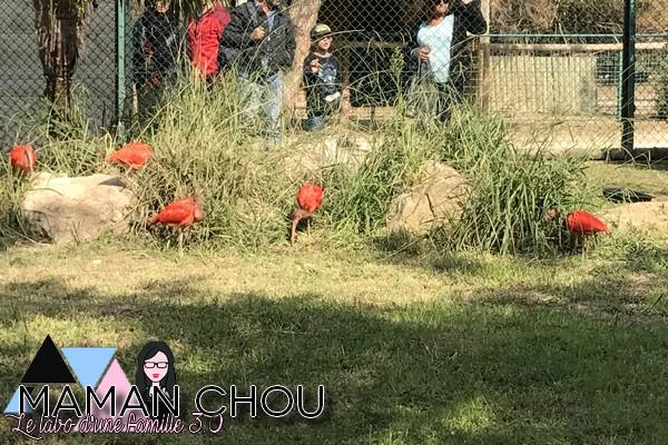 zoo-de-la-barben-22