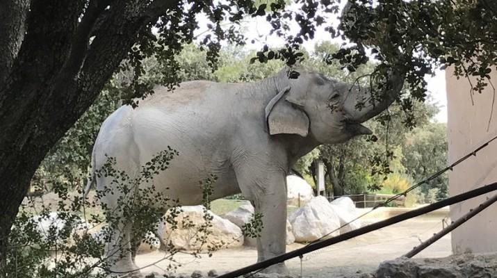 zoo-de-la-barben-26