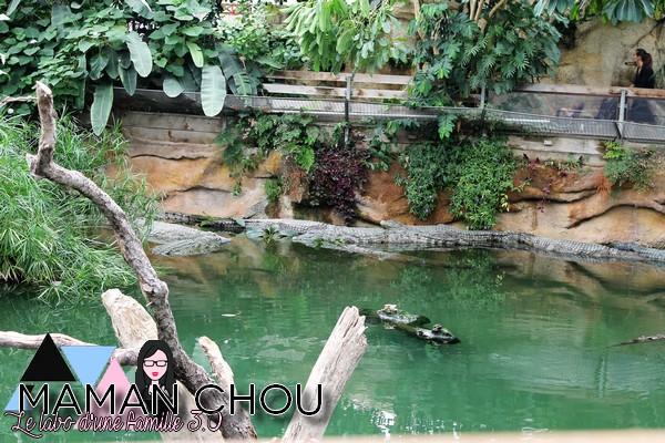 la ferme aux crocodiles (34)