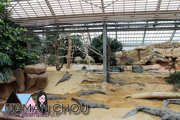 la ferme aux crocodiles (54)