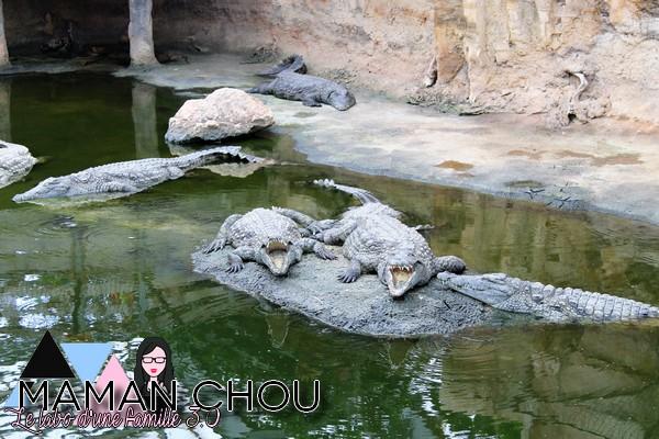 la ferme aux crocodiles (58)