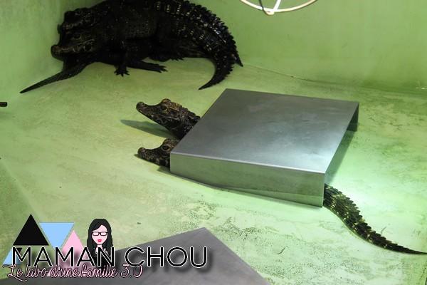 la ferme aux crocodiles (77)